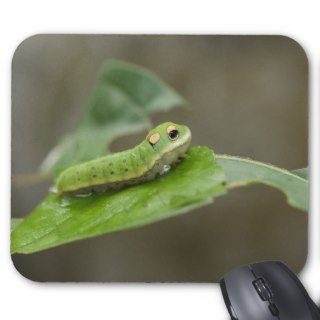 Butterfly Caterpillar Larva Mouse Pads