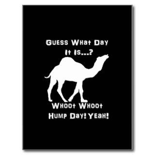White Hump Day Camel Postcard