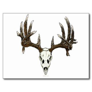 Whitetail deer skull 1 post card