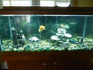 55 gallon fish tank weight aquarium planted tank in this for 55 gallon hexagon fish tank
