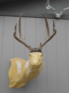 Tall 4x4 Mule Deer Antlers Whitetail Rack Mount Elk Moose Taxidermy Craft Sheds