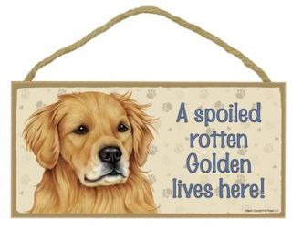"Spoiled Rotten Golden Retriever Lives Here Sign Plaque Dog 10""x5"" Gifts Pet"