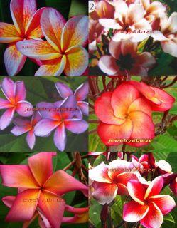 "Plumeria Frangipani Flowers Plants ""Mixed"" 35 Seeds"