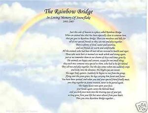 photograph about Poem Rainbow Bridge Printable called The Rainbow Bridge Poem Doggy Memorial Dog Reduction Print upon PopScreen