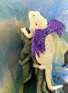 Bearded Dragon Wings Cosplay Halloween Costume and Harness Combo