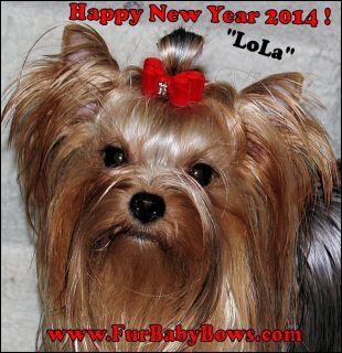 16 Goldtrim Heart Crystal Yorkie Dog Show Bows Shih Tzu Maltese Poodle BIEWER
