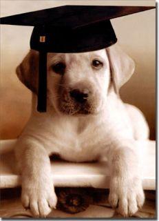 Puppy with Grad Cap Funny Graduation Card Greeting Card by Avanti Press