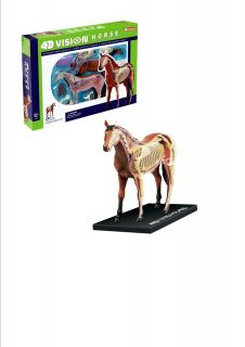 Horse Anatomy Model Puzzle 4D Vision Kit 26101 Tedco Science Toys