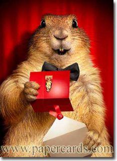 Prairie Dog Opens Envelope Funny Congratulations Card by Avanti Press