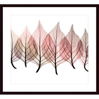 Steven N. Meyers 'Celosias' Wood Framed Print Prints